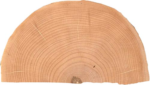 End-grain maple half-round slab